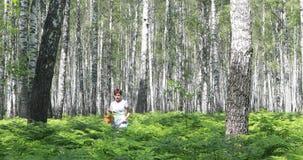 Una giovane donna cammina attraverso una foresta della betulla riunisce i funghi, i fiori, bacche in un canestro video d archivio