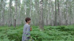 Una giovane donna cammina attraverso una foresta della betulla riunisce i funghi, i fiori, bacche in un canestro archivi video
