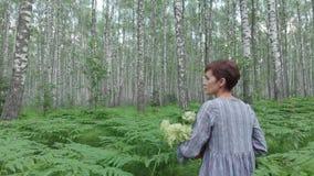 Una giovane donna cammina attraverso una foresta della betulla riunisce i funghi, i fiori, bacche in un canestro stock footage