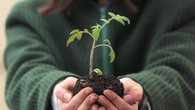 Una giovane donna che tiene una terra con un giovane germoglio della pianta verde in sue mani Concetto di ecologia video d archivio