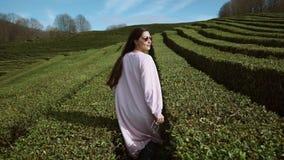 Una giovane e donna alla moda passeggia fra le piantagioni di tè di estate stock footage