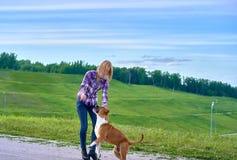 Una giovane ragazza bionda sta preparando un cane dell'americano Staf della razza fotografie stock libere da diritti