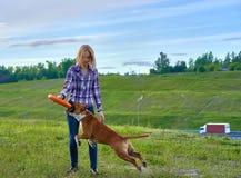 Una giovane ragazza bionda sta preparando un cane dell'americano Staf della razza fotografia stock libera da diritti