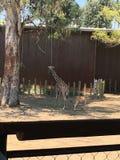 Una giraffa immagine stock