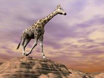 Giraffa osservando su una duna - 3D rendono Immagini Stock Libere da Diritti