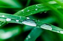 Una goccia della rugiada di mattina sull'erba Fotografie Stock