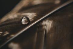 Una goccia di acqua su una piuma fotografie stock