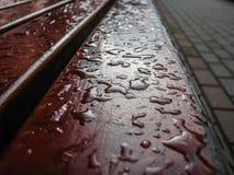 Una goccia di acqua su un albero, una via dopo una pioggia fotografia stock