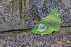 Una goccia di acqua su una foglia sul marciapiede Fotografia Stock
