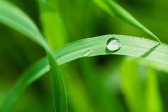 Una gocciolina su una lama dell'erba Immagini Stock