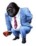 Una gorilla si è stancata dal commercio Immagine Stock