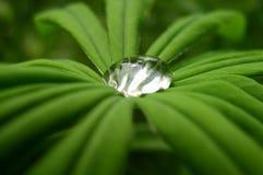 Una gota del agua Fotos de archivo