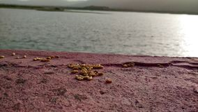 Una gran vista de algunos pedazos de arroz con la naturaleza Foto de archivo