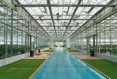 Una grande base di produzione della pianta verde Fotografia Stock Libera da Diritti