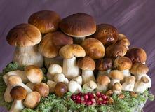 Una grande famiglia dei funghi Immagini Stock