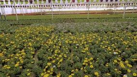 Una grande serra moderna con i fiori di fioritura, un caldo moderno per i fiori crescenti, molti fiori di fioritura stock footage