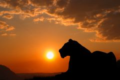 Una grande siluetta della tigre La tigre è riposante e guardante l'ambiente Bello tramonto e cielo arancio nei precedenti fotografie stock libere da diritti