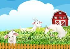 Una granja con tres cabras libre illustration