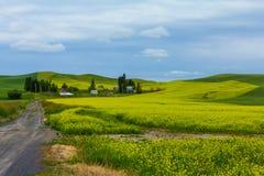 Una granja y una cosecha de la mostaza Fotografía de archivo libre de regalías