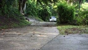 Una guida di veicoli su una strada ripida nei tropici stock footage