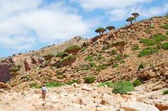 Una guida nella foresta degli alberi di Dragon Bottle nella zona protetta del plateau di Homhil, isola di socotra, Yemen Immagini Stock
