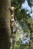 Una guirnalda de rapans Fotografía de archivo