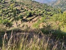Una hermosa vista de los campos verdes de la terraza fotografía de archivo
