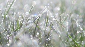 Una hierba cubierta con el primer de los cristales de la helada metrajes
