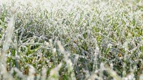 Una hierba del césped cubierta con los cristales de hielo almacen de video