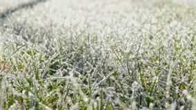 Una hierba del césped cubierta con los cristales de hielo almacen de metraje de vídeo