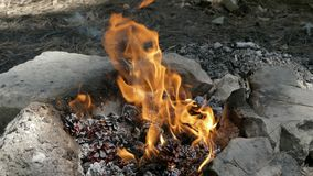 Una hoguera en Forest With Pinecones almacen de video