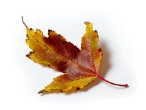 Una hoja colorida del otoño Imágenes de archivo libres de regalías