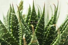 Una hoja con una mirada frío-observada, miradas en las cámaras, oculta detrás de las hojas Imagen de archivo