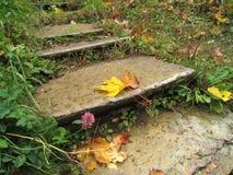 Una hoja de arce caida miente en los viejos pasos concretos estrechos mojados foto de archivo