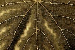 Una hoja de una planta con una textura pronunciada Imagen de archivo libre de regalías