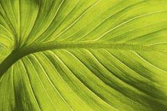 Una hoja de un primer interior tropical de la flor foto de archivo libre de regalías