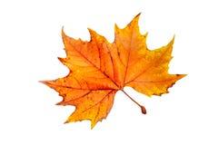 Una hoja del otoño Fotos de archivo libres de regalías