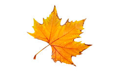 Una hoja del otoño Foto de archivo