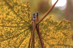 Una hoja del otoño está en un parque viejo Foto de archivo libre de regalías