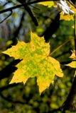 Una hoja en otoño Fotos de archivo libres de regalías