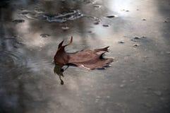 Una hoja en un charco del agua Imagen de archivo libre de regalías
