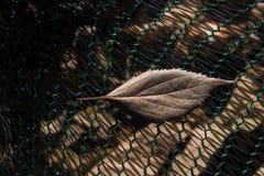 Una hoja seca separada en la visión Fotos de archivo libres de regalías