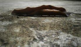 Una hoja secada en el piso fotos de archivo