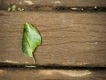 Una hoja verde natural en el piso de madera fotos de archivo