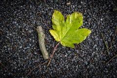 Una hoja verde y un palillo corto que mienten en el camino Foto de archivo libre de regalías