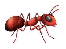Una hormiga Foto de archivo libre de regalías