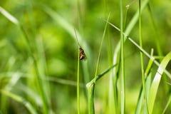Una hormiga con las alas en la hierba Imagenes de archivo