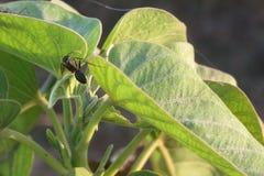 Una hormiga en la hoja imagen de archivo