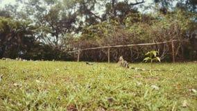 Una iguana grande y pequeña que viaja junto metrajes