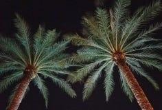 Una imagen abstracta de las palmeras iluminadas en luz reflejada Foto de archivo libre de regalías